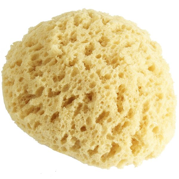 Nycupcake S Musings 187 Blog Archive 187 Pier 1 Natural Sea Sponge