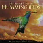 The Secret Lives of Hummingbirds book by DWL